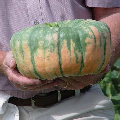 Speckled Hound F1 Hybrid Pumpkin