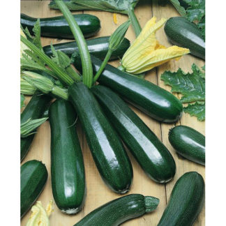 Black Beauty Zucchini Summer Squash