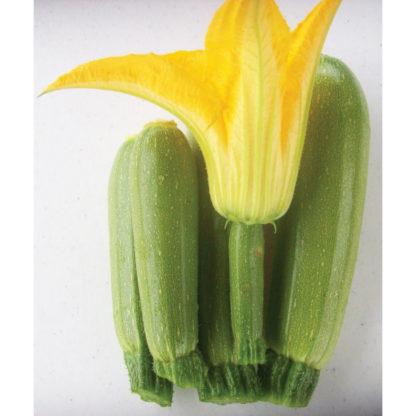 Clarice F1 Hybrid Zucchini Summer Squash