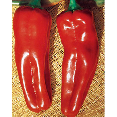 Marconi Rosso Large Sweet Pepper from our Italian Gourmet Seed Collection