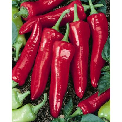 Big Jim Hot Pepper