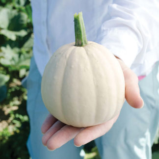 Buffy F1 Hybrid Mini Winter Squash