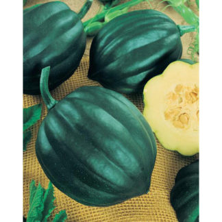 Table Queen Winter Acorn Squash
