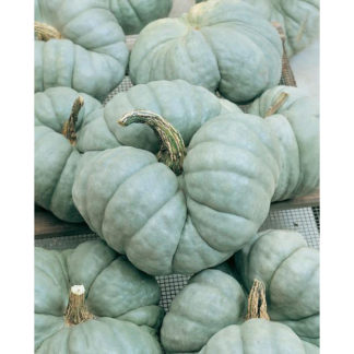 Triamble Heirloom Winter Squash