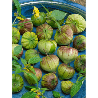 Purple Tomatillo Heirloom