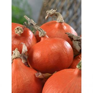 Red Kuri (Orange Hokkaido) Certified Organic Winter Squash