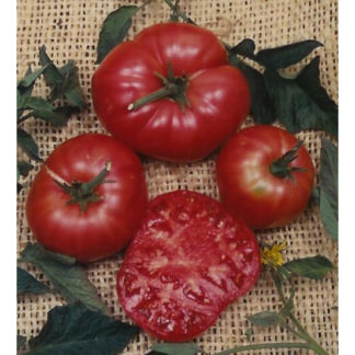 Brandywine Pink Heirloom Tomato
