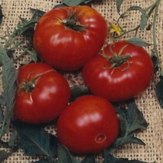 Brandywine Red Heirloom Tomato