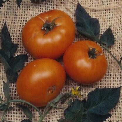Brandywine Yellow Heirloom Tomato