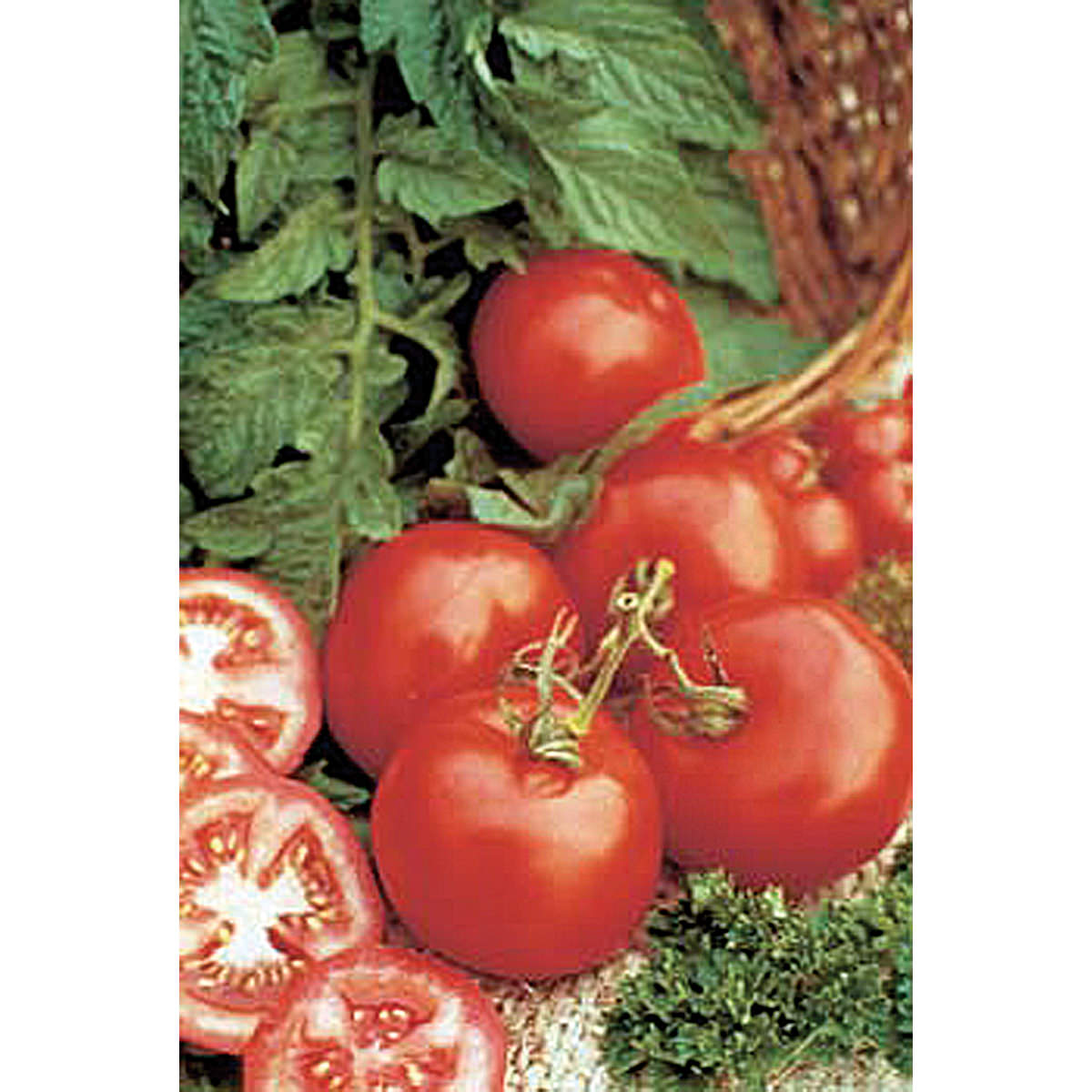 Early F1 Hybrid Tomato