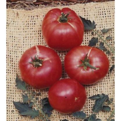 German Johnson Heirloom Tomato