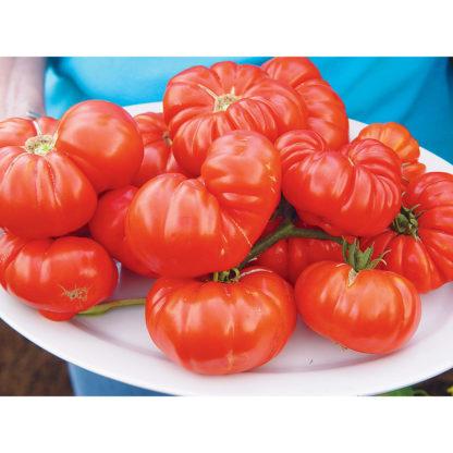 Grandma's Pick F1 Hybrid Heritage Type Tomato