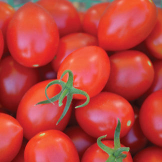 Uva Roja F1 Hybrid Grape Shaped Tomato