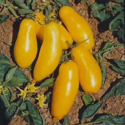 Banana Legs Paste Tomato