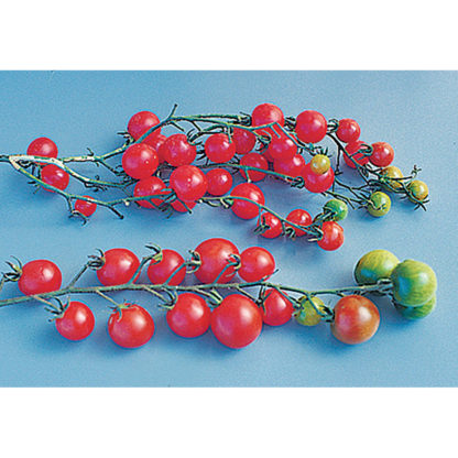 Sweet Million F1 Hybrid Cherry Tomato