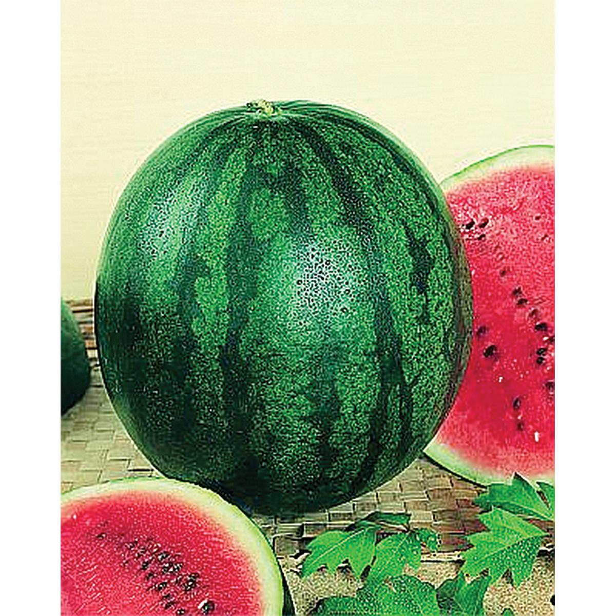 Bush Sugar Baby Watermelon Seeds Ne Seed