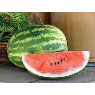 Playmate F1 Hybrid Watermelon