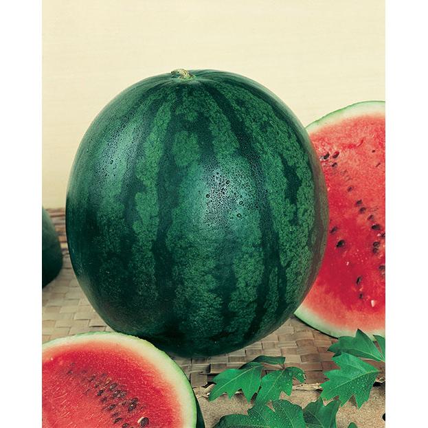 Sugar Baby Watermelon Seeds - NE Seed