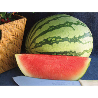 Pee Dee Sweet F1 Hybrid Seedless Watermelon