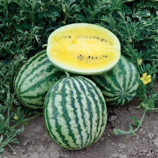 Lemon Krush F1 Hybrid Watermelon