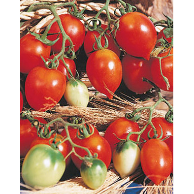 Principe Borghese Italian Cherry Tomato from our Italian Gourmet Seed Collection