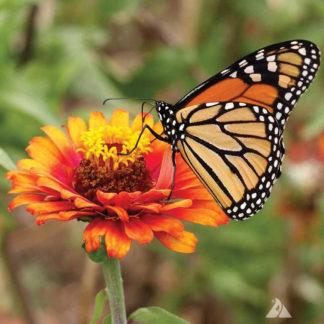 Monarch Butterfly Wildflower Mix