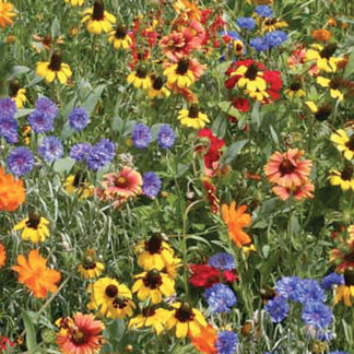 Southeast Wildflower Mix