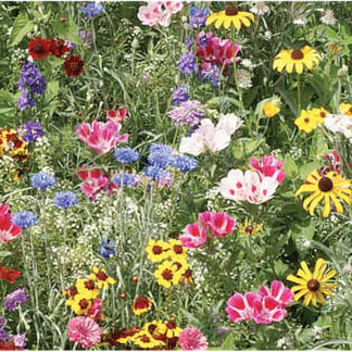 Bird & Butterfly Wildflower Mix