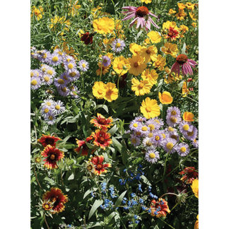 21310-Bee-Feed-Mix-Wildflowers