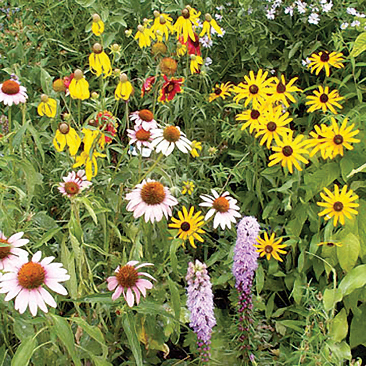 Native Perennial Wildflower Seed Mix Ne Seed
