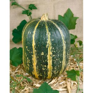 32545-Tours-Pumpkin