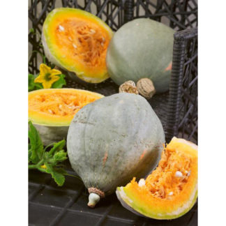 Baby Blue Hubbard Winter Squash