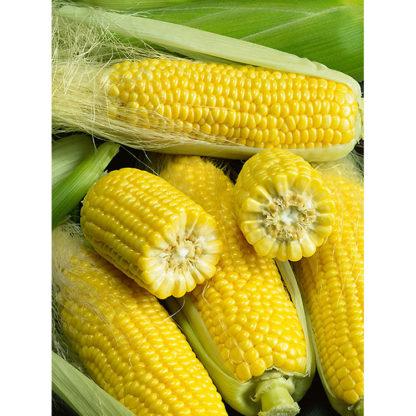 Golden Bantam Yellow Open Pollinated Corn Seeds