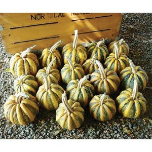 American Tondo Winter Squash Seeds