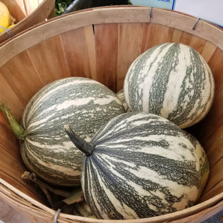 Silver Edged Winter Squash Seeds